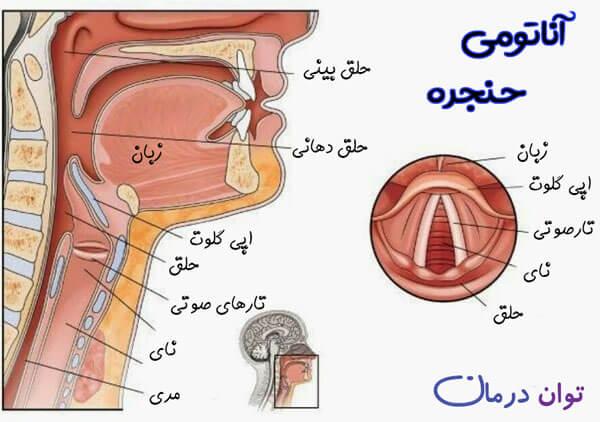 ساختار سر و گردن